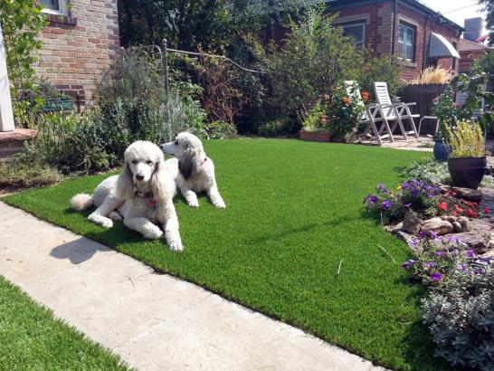 Artificial Grass Photos: Artificial Grass Installation Seeley, California Landscaping Business, Dogs Park