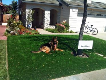 Artificial Grass Photos: Artificial Turf Installation Valley Center, California Pet Turf, Small Front Yard Landscaping