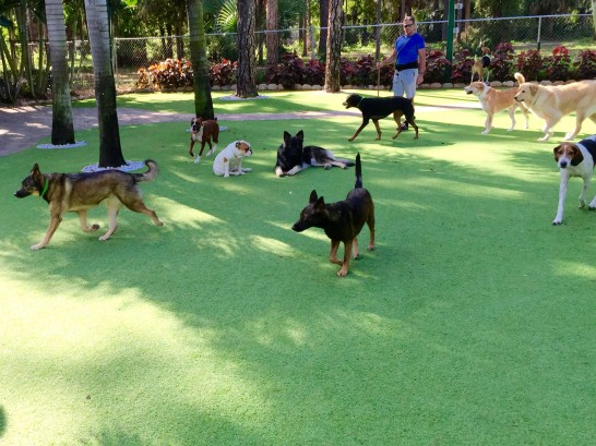 Artificial Grass Photos: Fake Turf Bostonia, California Dog Grass, Dogs Park