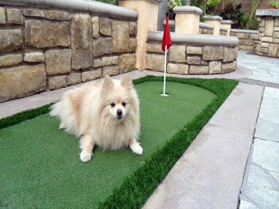 Artificial Grass Photos: Grass Turf Calexico, California Hotel For Dogs, Backyard Design