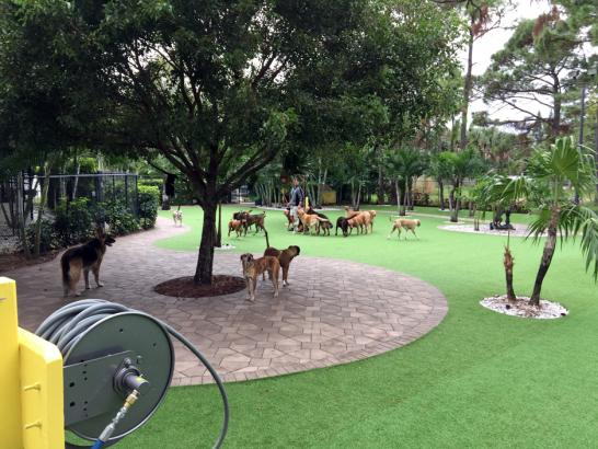 Artificial Grass Photos: Outdoor Carpet Rancho San Diego, California Dog Parks, Commercial Landscape